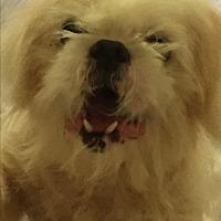 Adopt A Pet :: Grover - Pt orange, FL