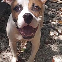 Adopt A Pet :: Clifford - Key Largo, FL