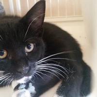 Adopt A Pet :: Chaz - Waupun, WI