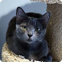Adopt A Pet :: Daphne - Lincoln, NE