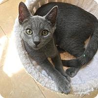 Adopt A Pet :: Remington - Smithtown, NY