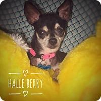 Adopt A Pet :: Halle Berry - Maitland, FL