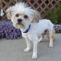 Adopt A Pet :: Kylie BB - Seattle, WA