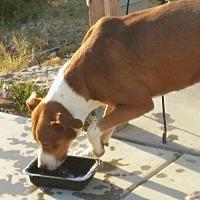 Adopt A Pet :: JoeJoe - Tonopah, AZ