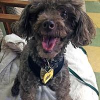 Adopt A Pet :: Cherie - Ventura, CA