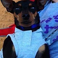 Adopt A Pet :: Bentley - Los Banos, CA