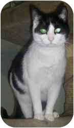 Domestic Shorthair Cat for adoption in Strathmore, Alberta - Fern