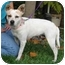 Photo 4 - Terrier (Unknown Type, Small)/Chihuahua Mix Dog for adoption in Simi Valley, California - Betsy
