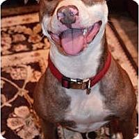 Adopt A Pet :: Lilka - in NE - kennebunkport, ME