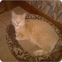Adopt A Pet :: Leo - Greenville, SC