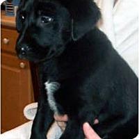 Adopt A Pet :: FAITH - Southport, NC