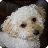Adopt A Pet :: Sammy3 - La Costa, CA