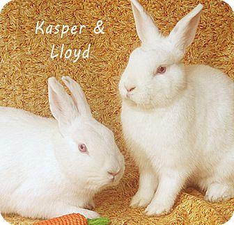 Florida White Mix for adoption in Santa Barbara, California - Kasper & Lloyd