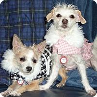 Adopt A Pet :: Roxy and Daisy - Los Angeles, CA