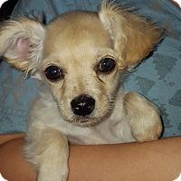 Adopt A Pet :: Shasta - Las Cruces, NM