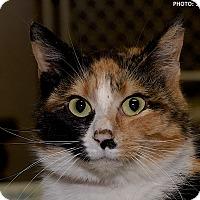 Adopt A Pet :: Dash - Medina, OH