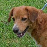 Adopt A Pet :: Bobo - Brunswick, ME