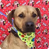 Adopt A Pet :: RAMSES - Irvine, CA