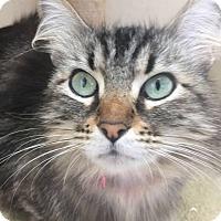 Adopt A Pet :: Sassy - Chula Vista, CA