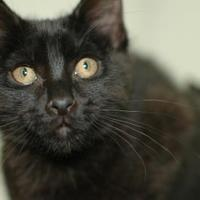 Adopt A Pet :: Zircon - Buffalo, WY