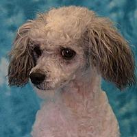 Adopt A Pet :: Maddox - Eureka, CA