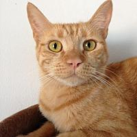 Adopt A Pet :: Rusty - Alamogordo, NM