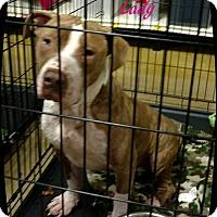 Adopt A Pet :: Lady - Ahoskie, NC