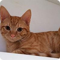 Adopt A Pet :: Richie Cunningham - Cary, NC