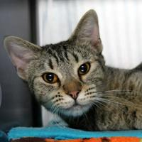 Adopt A Pet :: Thea - St. Petersburg, FL