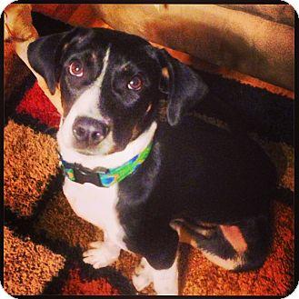 Labrador Retriever Mix Dog for adoption in Marietta, Georgia - Lemon
