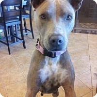 Adopt A Pet :: Marni - justin, TX