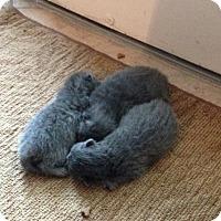 Adopt A Pet :: MALBA THREE - Whitestone, NY
