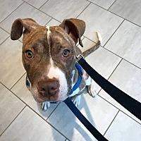 Adopt A Pet :: Naomi - Villa Park, IL