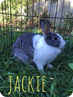 Dutch for adoption in Elizabethtown, Kentucky - Jackie