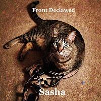 Adopt A Pet :: Sasha - Bentonville, AR