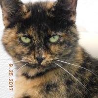 Adopt A Pet :: Amber - Owensboro, KY