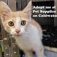 Adopt A Pet :: LILAC - Fort Wayne, IN