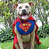 Adopt A Pet :: Tuck - Lake Worth, FL
