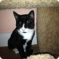 Adopt A Pet :: Ashley - East Hanover, NJ