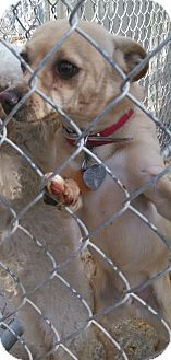 Yorkie, Yorkshire Terrier Mix Dog for adoption in Wichita, Kansas - Michael