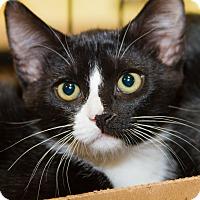 Adopt A Pet :: Deb - Irvine, CA