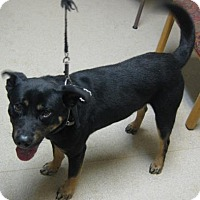 Adopt A Pet :: Roscoe - Gary, IN