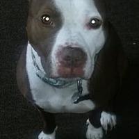 Adopt A Pet :: Abby - Connecticut - Fulton, MO