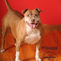 Pit Bull Terrier Dog for adoption in Topeka, Kansas - Princess