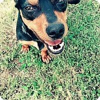 Adopt A Pet :: Messick - Charlotte, NC