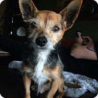 Adopt A Pet :: Chester - Leduc, AB