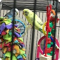 Adopt A Pet :: Katie & Ginny - Punta Gorda, FL