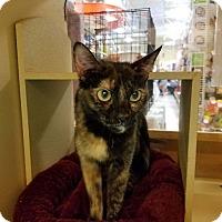 Adopt A Pet :: Tamera - Winchester, CA