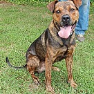 Adopt A Pet :: Damon (65 lb) Please Read