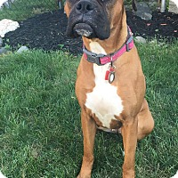 Adopt A Pet :: Available to Adopt - Nala - Waterford, MI